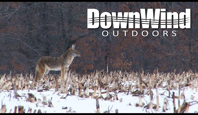 Midwest Coyote Hunting: Tad Successful (DownWind Outdoors)