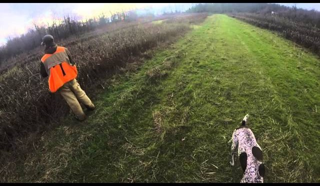 M&M Pheasant Hunting 2015!