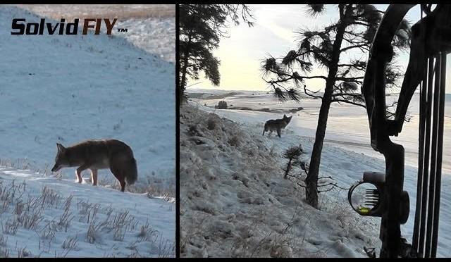 Sweet Coyote Archery Hunt POV Head Cam – Solvid FIY 2013-01