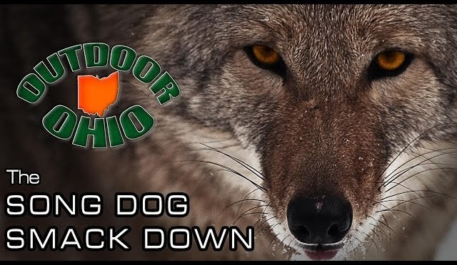 The Song Dog Smack Down, an Ohio coyote hunting drive!