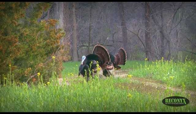 Awesome Weekend Turkey Hunting With The Girls: 2 Gobblers Down!