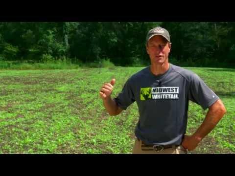 Bill Winke, Host of Midwest Whitetail, endorses DeerGro