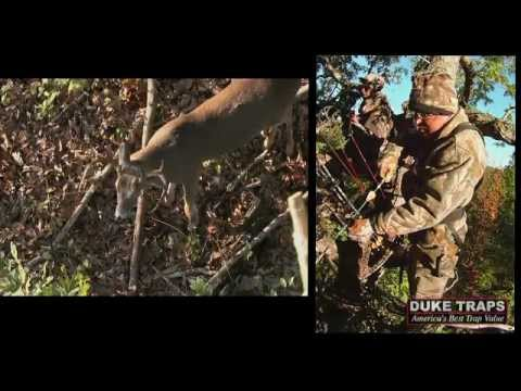 Bow Hunting And Grunt Calling! A Buck at Three Yards