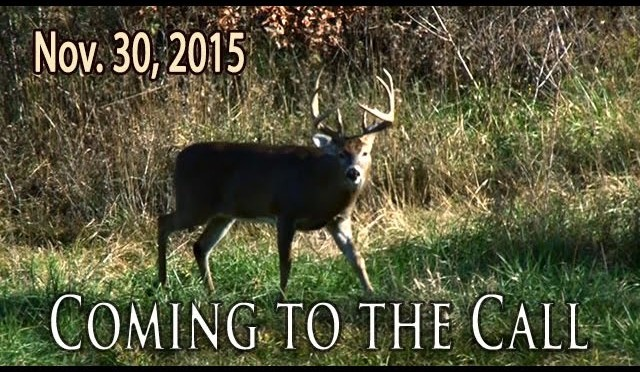 Coming To The Call | Midwest Whitetail