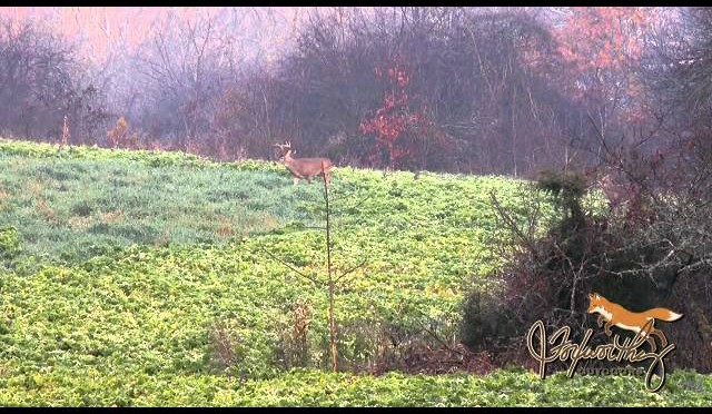 Deer Hunting In The Pre Rut: It Really Was A Perfect Shot!