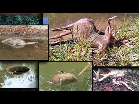Deer Hunting Strategies: Food Plots, Acorns, And Dead Deer!
