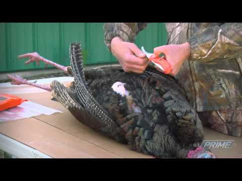 Easily Field Dress A Wild Turkey! How To Quickly Remove The Breast Meat