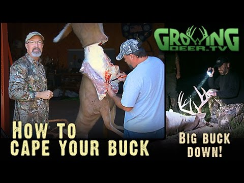 First BOW HUNT Of The Season AND How To Cape-Out A Buck