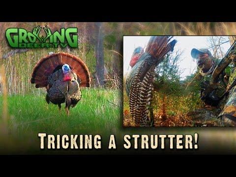 Fun Turkey Hunting Adventures: Tricking A Strutter
