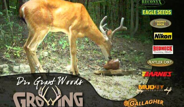 Get Bigger Bucks By Providing Minerals All Year
