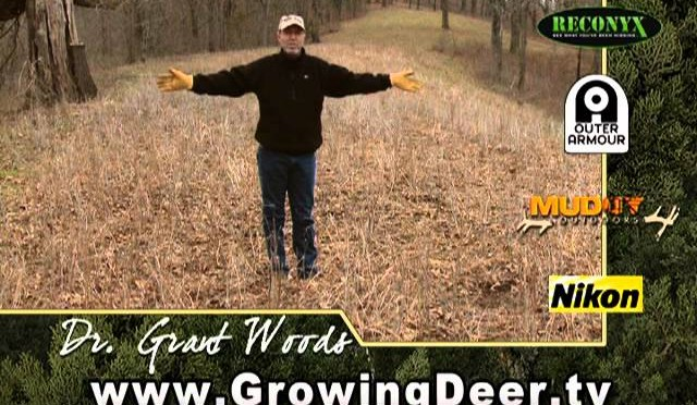 Get The Best Food Plot: Where's The Sun?