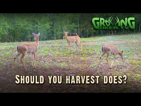 How Many Deer? Simple Tools And Tips For Better Deer Hunting