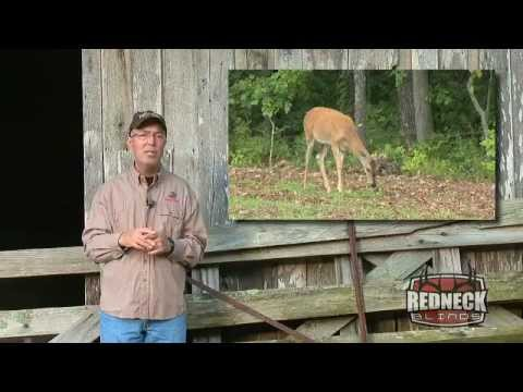 Hunting Whitetails Without Corn? by GrowingDeer.tv