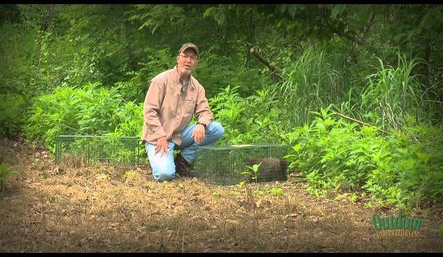 Kansas Turkey Hunt: Lindsey's Longbeard Plus Managing Food Plot Pests