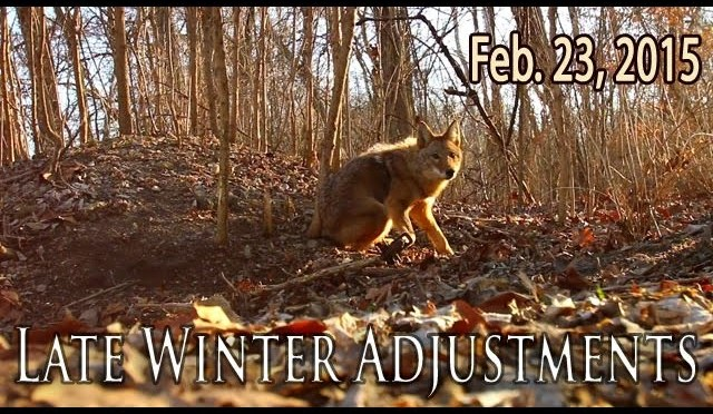 Midwest Whitetail | Trapping Coyotes and Property Maintenance