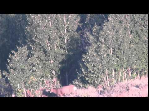 Mule Deer Hunting in Nevada