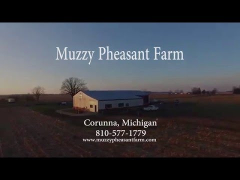 Muzzy Pheasant Farm Drone Footage of Tower Hunt 01/02/2016