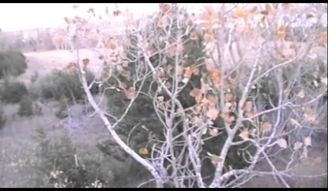 Nov 1st 2012-Kansas-Osok's first midwest whitetail outing