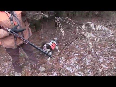 Pheasant Hunt at Gobblers Knob