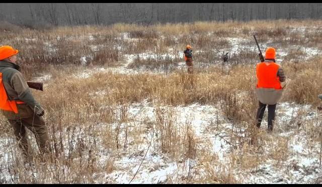 Pheasant Hunting 1/2/2016