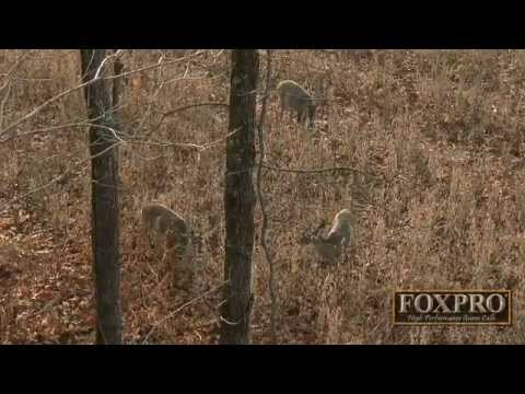 Prescribed Fire for Whitetails by GrowingDeer.tv