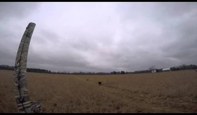 Shallow Creek Pheasant Hunting 2015