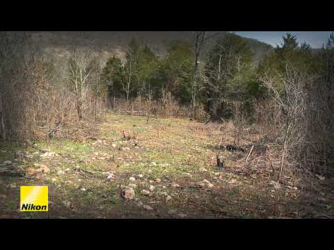 Spring Deer Management: Making And Maintaining Food Plots