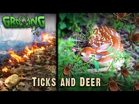 The Whitetail's Smallest Predator: Ticks