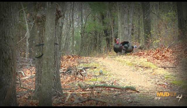 Turkey Hunting: Bow Hunting Kansas Rio's Then Missouri Turkey Opener, 2 Hunts – 3 Birds!
