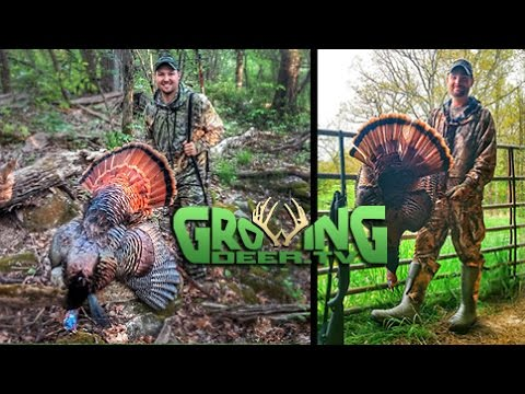 Turkey Hunting Challenges: 2 Gobblers Down!
