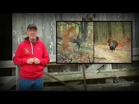 Turkey Hunting Challenges: Teasing In A Big Tom