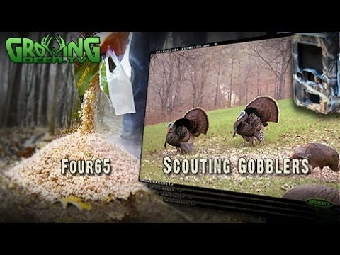 Turkey Hunting: How To Scout for Gobblers