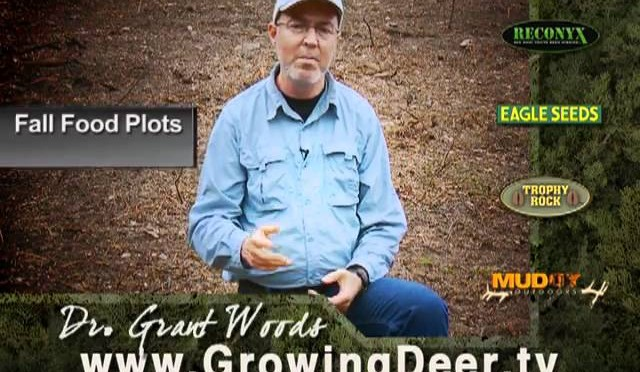 Whitetail Food Plots: When To Plant Fall Food Plots