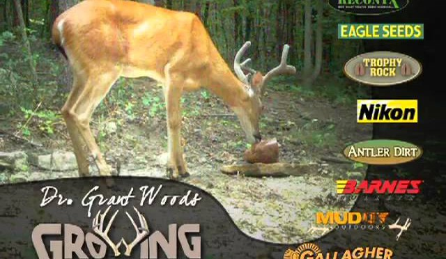 Why Minerals Are Important for Whitetails