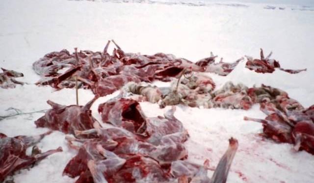 1st Caribou Hunt (Epic)