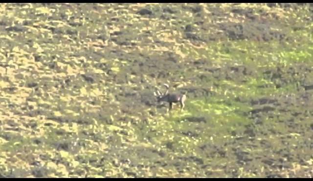 Alaska 080914 0509 Caribou hunting 2