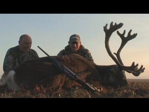 Alaska Caribou dropped near Prudou Bay Dead Horse