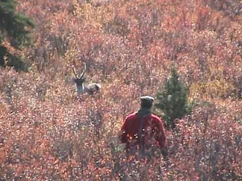 Alaska Caribou hunt
