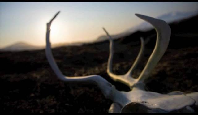 Aleutian Caribou Hunt