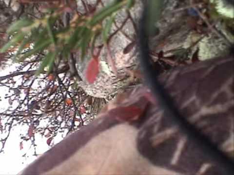 Antholz_Caribou_Canadian_SubArctic_Hunting_1_1.wmv