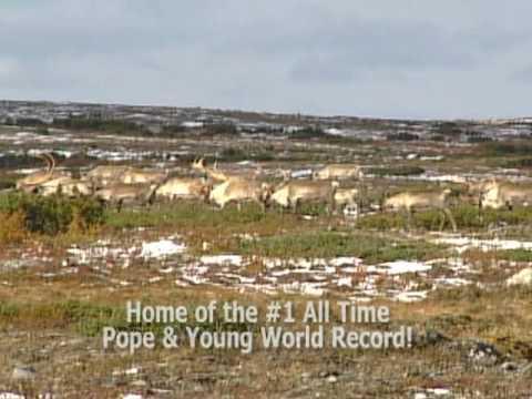 Arctic Adventures Majestic Caribou :30 TV Spot