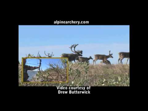 Bowhunting caribou with Alpine Silverado