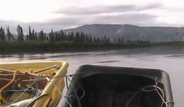 Caribou clips part1