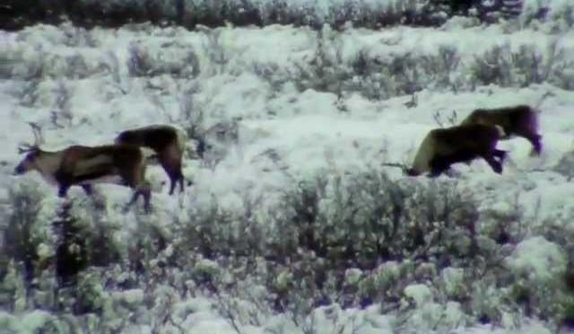 caribou hunt 2011