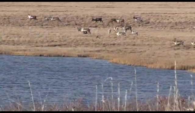 Caribou Hunting in Northern Alaska