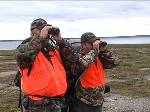Caribou Hunting Vignette – Early Season – Adventures North