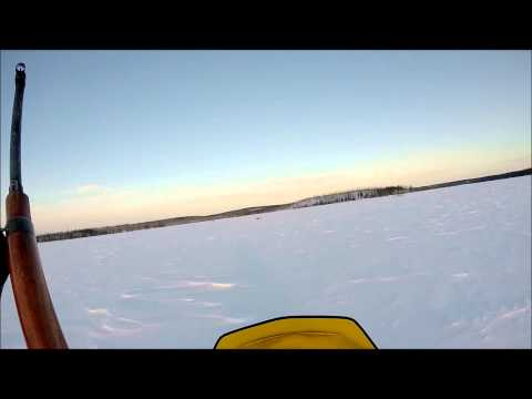 Caribou hunting with GOPRO hero 3+