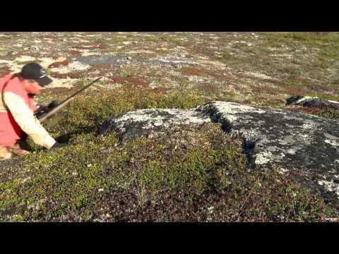 Caribou Huntings Ultimate Destination