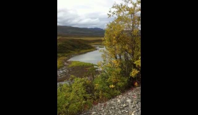 Denali hwy caribou hunt