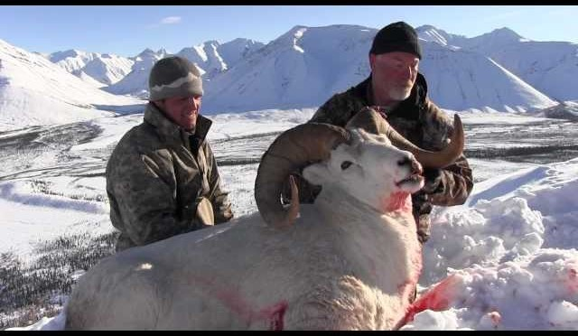 Hunting Dall Sheep, Caribou and Moose with Arctic Red River Outfitters #9